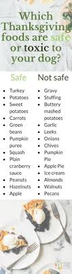 foods your can and can t eat from the table this thanksgiving