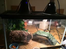 leopard gecko lighting at night just got a baby leopard gecko how is my set up geckos
