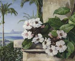 65 foliage and flowers of a climbing plant with royal palms and