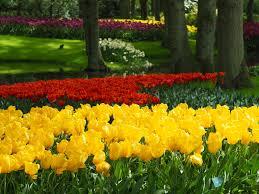 flower garden in amsterdam tulips of holland u2014 maddie chester