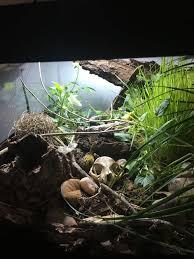 viv tips for ball python and or kingsnake snakes