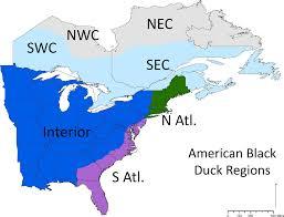 Duck Migration Map Updating Movement Estimates For American Black Ducks Anas