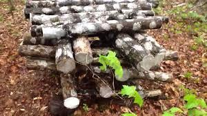 shiitake mushroom logs in the backyard farm youtube
