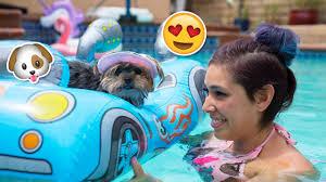buying my dog baby pool toys youtube