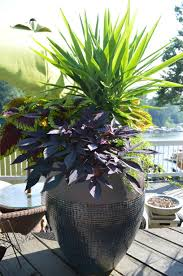Large Planter Pot by Tropical Pot Plants 80 Awesome Exterior With Large Container