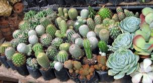 farmers garden cubao quezon city philippine observers