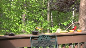 orioles and scarlet tanagers gorge on grape jelly youtube