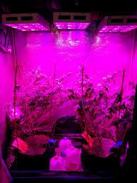 t5 vs led grow lights 39 elegant t5 led grow lights home idea