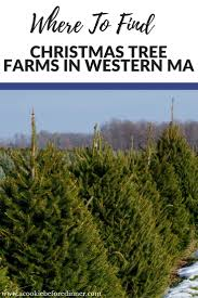 christmas tree farms christmas decor