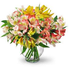 peruvian lilies peruvian lilies moline il florist