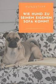 sofa fã r hunde niedlicer mops welpe auf dem sofa gekuschelt www mops pfote