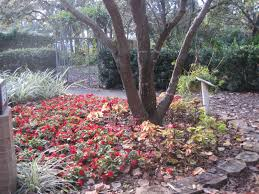 florida friendly landscaping in hernando county