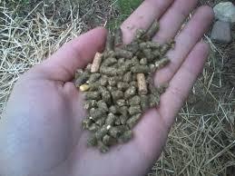category feeding holly u0027s hollands rabbitry