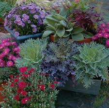 Plant Combination Ideas For Container Gardens Fall Outdoor Container Gardening Tips For Fall And Winter