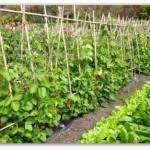backyard vegetable garden layout gardening flowers 101 gardening