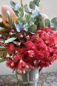 australian native plants list 34 best red u0026 pink native flowers images on pinterest australian