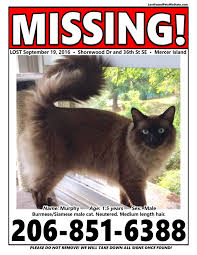 Missing Cat Meme - missing cat mercer island wa lost found pets wa state