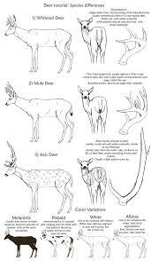 18 best art deer drawings images on pinterest drawing ideas