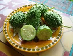แตงกวาเงาะ ornamental cucumber maidokonline