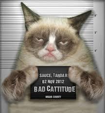 Grumpy Cat Photo 1 Best - grumpy cat wallpapers in high quality ashton fairbank for desktop