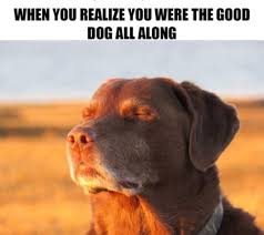 Cool Dog Meme - 100 dog memes that will keep you laughing for hours