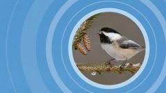 The Backyard Bird Company - power struggles are playing out at your feeder u2014here u0027s what to look
