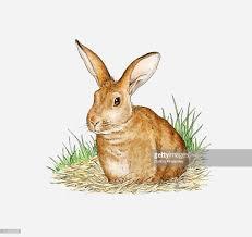 illustration of wild rabbit siting on straw stock illustration