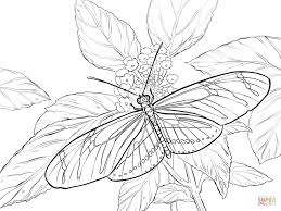 elegant butterfly coloring pages about remodel elegant