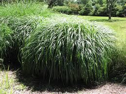 landscaping ideas for front yards planting ornamental grasses