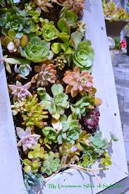 planters that hang on the wall diy hanging succulent planter my uncommon slice of suburbia
