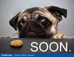 Cookie Meme - image soon pug dog cookie meme jpg my singing monsters wiki
