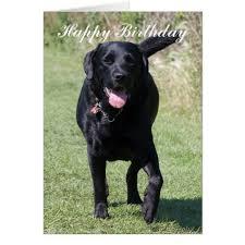 labrador retriever black dog happy birthday card zazzle com