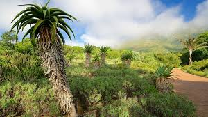 Kirstenbosch National Botanical Garden Kirstenbosch National Botanical Gardens Cape Town Expedia Co In