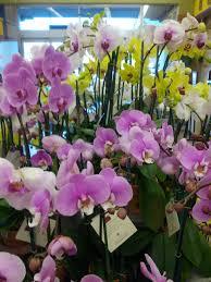 Plants Indoors by The Art Of Growing Plants Indoors The Smarter Gardener