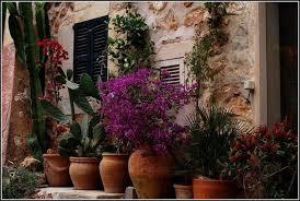 pflanzen f r balkon mediterrane pflanzen fr balkon balkon house und dekor galerie