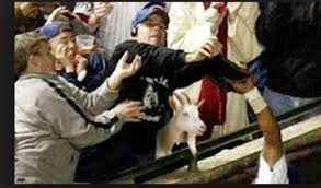 Billy Goat Meme - 1969 cubs steve bartman that billy goat you re all off the