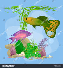 Home Blue Fish Cartoon Tropical Fish Swimming Nature Undersea Stock Vector