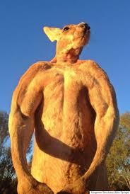 Roger A Barnes Meet Roger An Incredibly Buff Kangaroo That Crushes Buckets