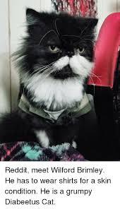 25 best memes about diabeetus cat diabeetus cat memes