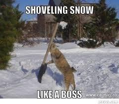 Snow Memes - snow memes cat killfoil
