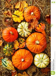 harvest thanksgiving harvest or thanksgiving background with gourds and straw stock
