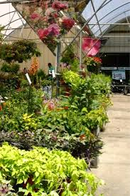 Raleigh Botanical Garden Norwood Road Garden Raleigh Nc Perennials Annuals 72 Res