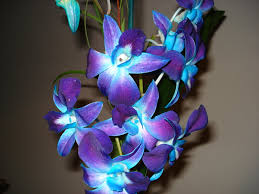 blue and purple orchids blue purple orchids by skittler335 on deviantart