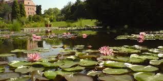 Bermuda Botanical Gardens Botanical Gardens Wroclaw Poland Local