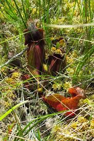 pine barrens u2013 greg u0027s world