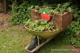 Patio Plants For Sun 30 Flower Container Ideas To Make Your Garden Wonderful Empress