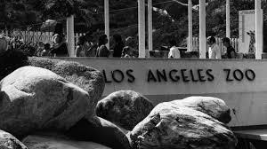 a look back at 50 years la zoo curbed la