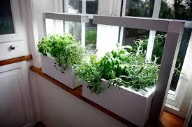 herb garden indoor how to grow an indoor herb garden farm and dairy