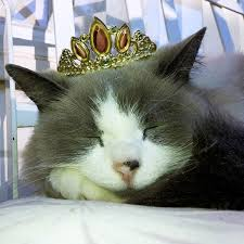 why do cats purr it u0027s not just because they u0027re happy wired