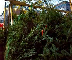 christmas tree prices christmas tree prices in new york city hit 1 000